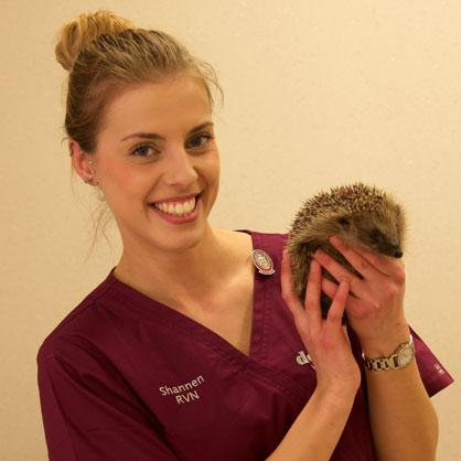 Shannen Bunting, RVN at Dovecote Veterinary Hospital